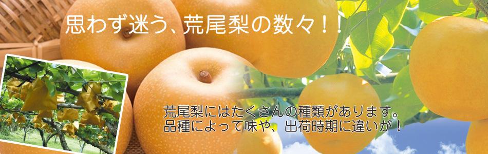 荒尾梨の品種