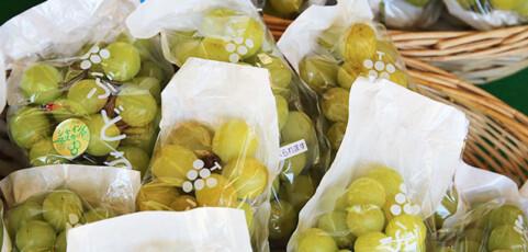 梨もブドウもおまかせ!の鶴田農園さん