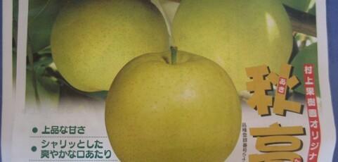 村上果樹園限定☆「秋高」始まりました!