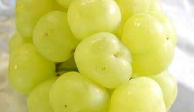 葡萄もおススメ!村上果樹園!